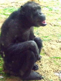 栄養士のための「おとなの動物園の楽しみ方」を開催して。_d0046025_09441553.jpg