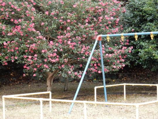 '17,11,15(水)サザンカの咲く公園とチーズフォンデュ!_f0060461_10463583.jpg
