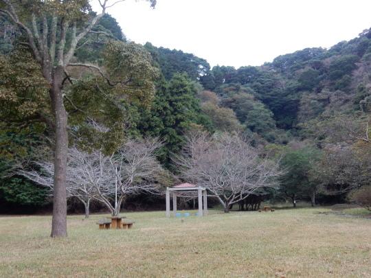 '17,11,15(水)サザンカの咲く公園とチーズフォンデュ!_f0060461_10470004.jpg