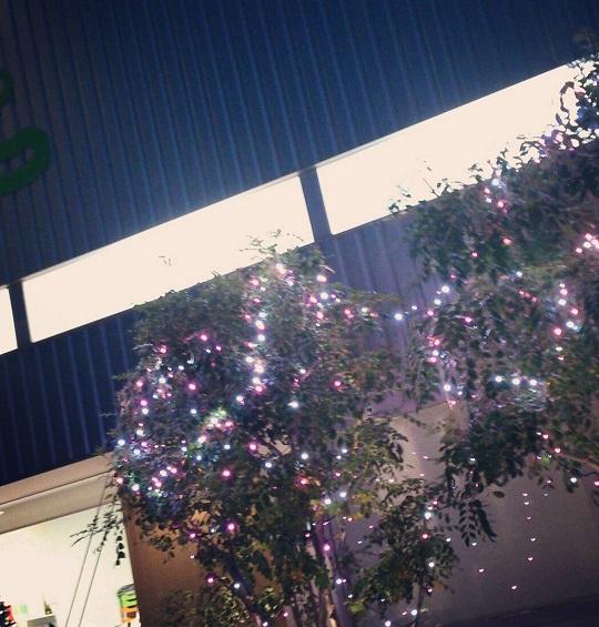 クリスマス装飾_f0172281_6564427.jpg