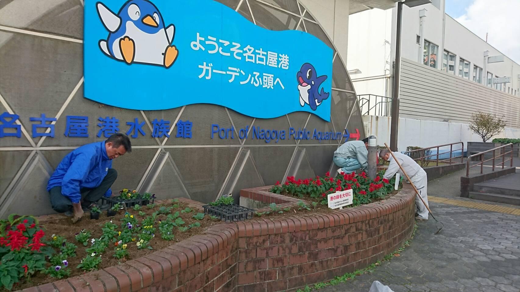 ガーデンふ頭総合案内所前花壇の植替えH29.11.13_d0338682_08475056.jpg
