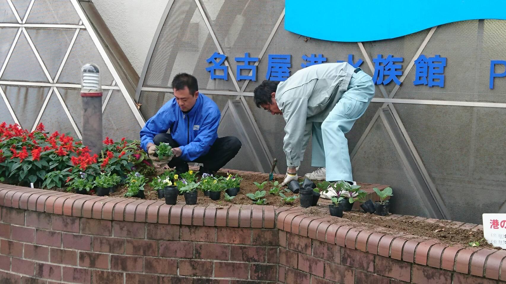 ガーデンふ頭総合案内所前花壇の植替えH29.11.13_d0338682_08513093.jpg