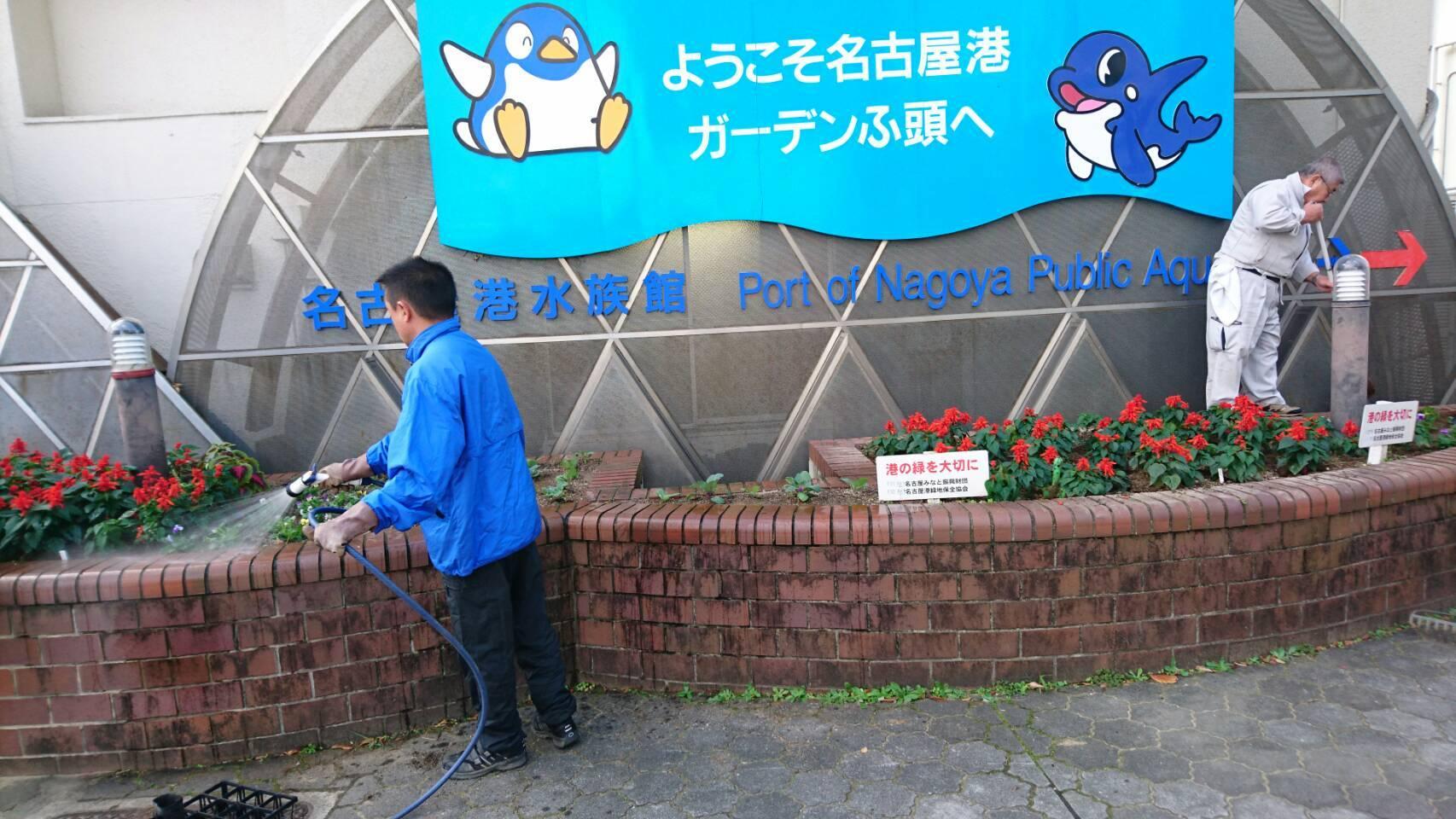 ガーデンふ頭総合案内所前花壇の植替えH29.11.13_d0338682_08521971.jpg