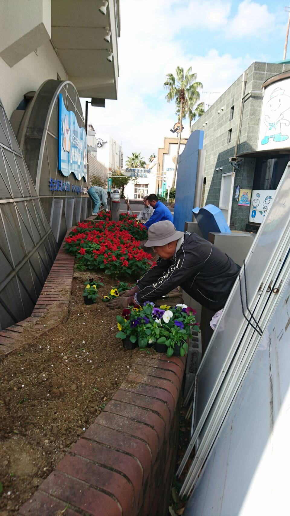 ガーデンふ頭総合案内所前花壇の植替えH29.11.13_d0338682_08524447.jpg