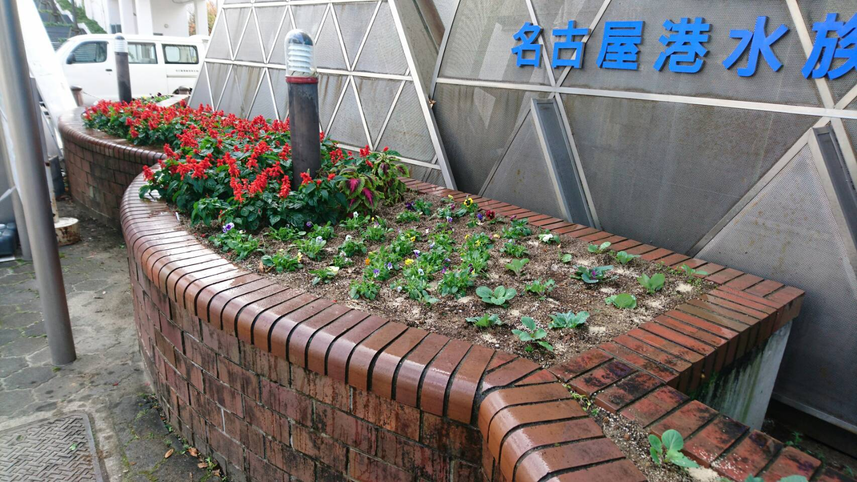 ガーデンふ頭総合案内所前花壇の植替えH29.11.13_d0338682_08542413.jpg
