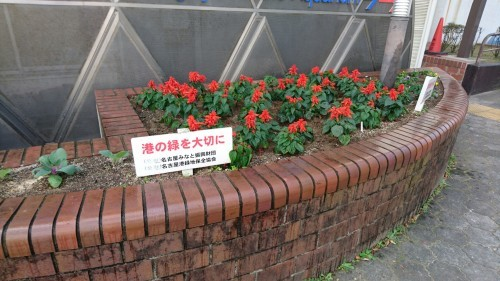 ガーデンふ頭総合案内所前花壇の植替えH29.11.13_d0338682_08545654.jpg