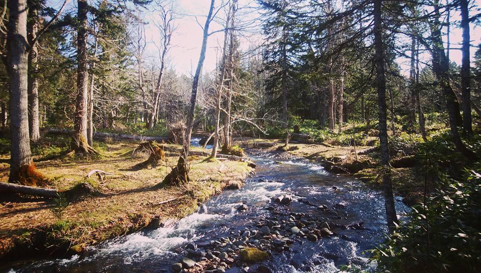 森林セラピー in ノンノの森_e0231387_11504496.jpg