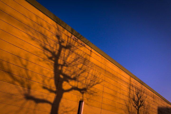 彷徨する光蜥蜴 -「表現者たち」第25回作品展_d0353489_2154923.jpg