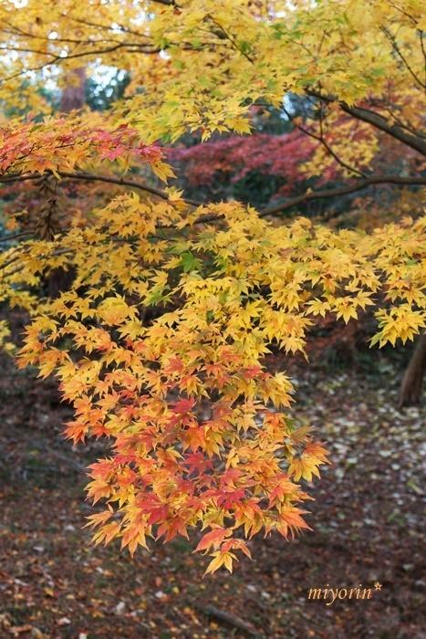 心の琴線に触れる♪ 再度公園の紅葉狩り - miyorinの秘密のお庭