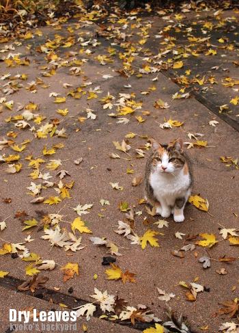 落ち葉を愛でるSandy_b0253205_06524920.jpg