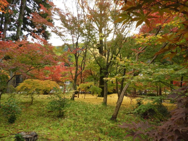 永観堂 紅葉が盛り_e0048413_22424463.jpg