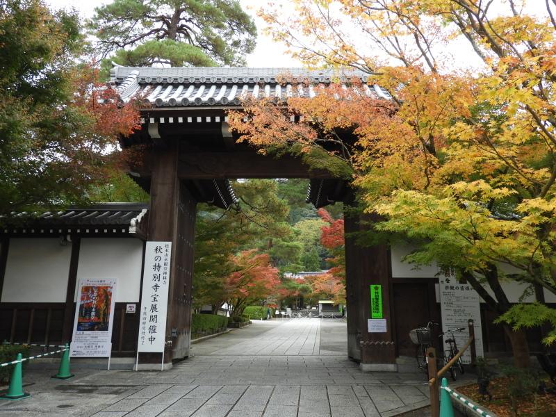 永観堂 紅葉が盛り_e0048413_22431688.jpg