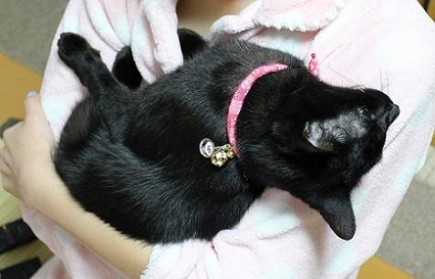 黒猫だらけ | 黒猫瓦版