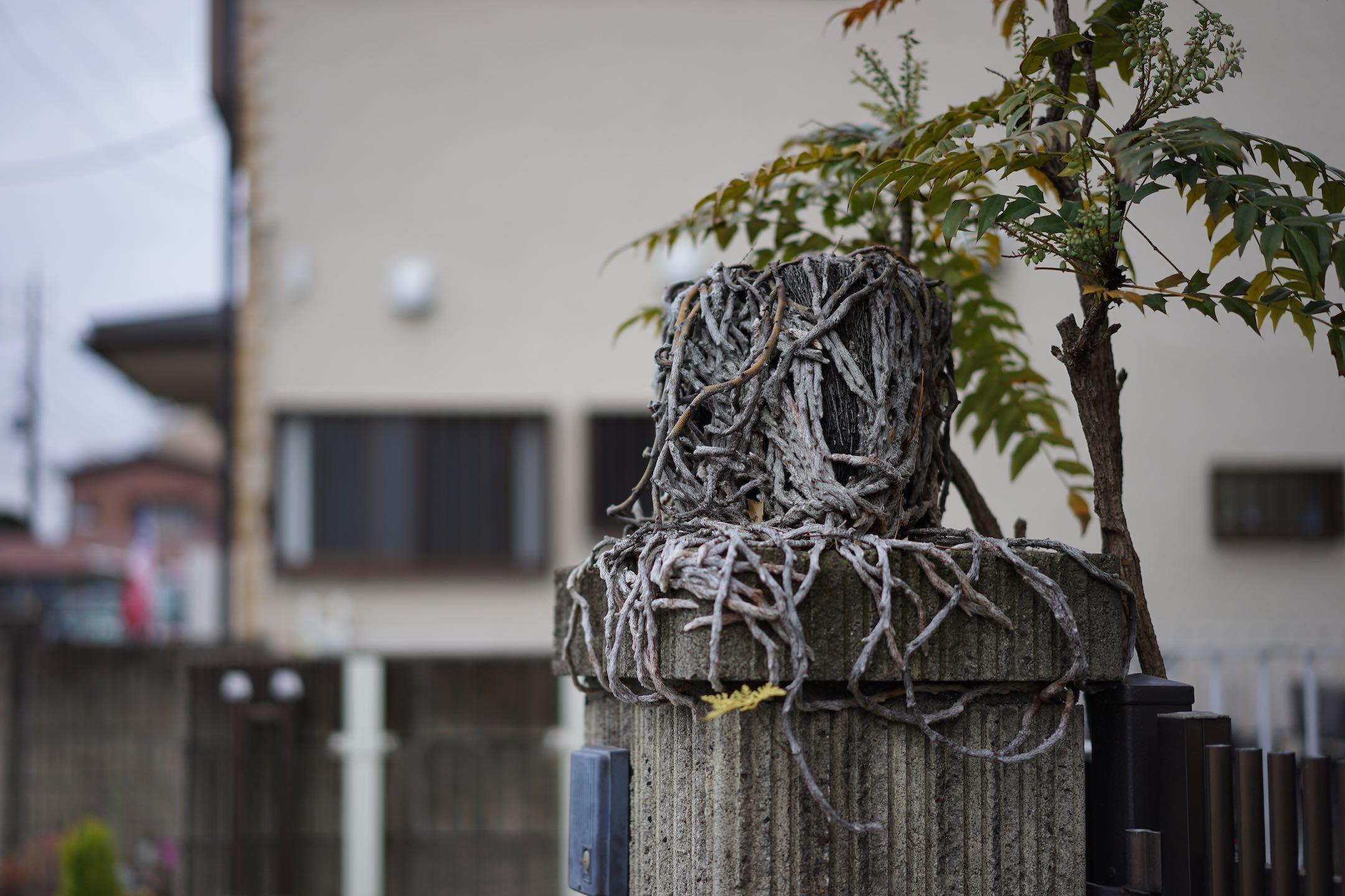 聖蹟桜ケ丘スナップ その49_b0360240_21433285.jpg