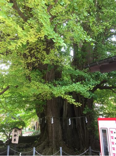 楽しい秋の温泉プチ旅行♪いざ山寺へ^^_f0207146_10515386.jpg