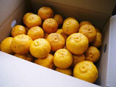 令和元年度の『香り高き柚子』の「冬至用柚子」はいよいよ残りわずか!!ご注文はお急ぎください!_a0254656_17363854.jpg