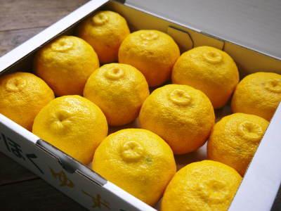 令和元年度の『香り高き柚子』の「冬至用柚子」はいよいよ残りわずか!!ご注文はお急ぎください!_a0254656_17374075.jpg