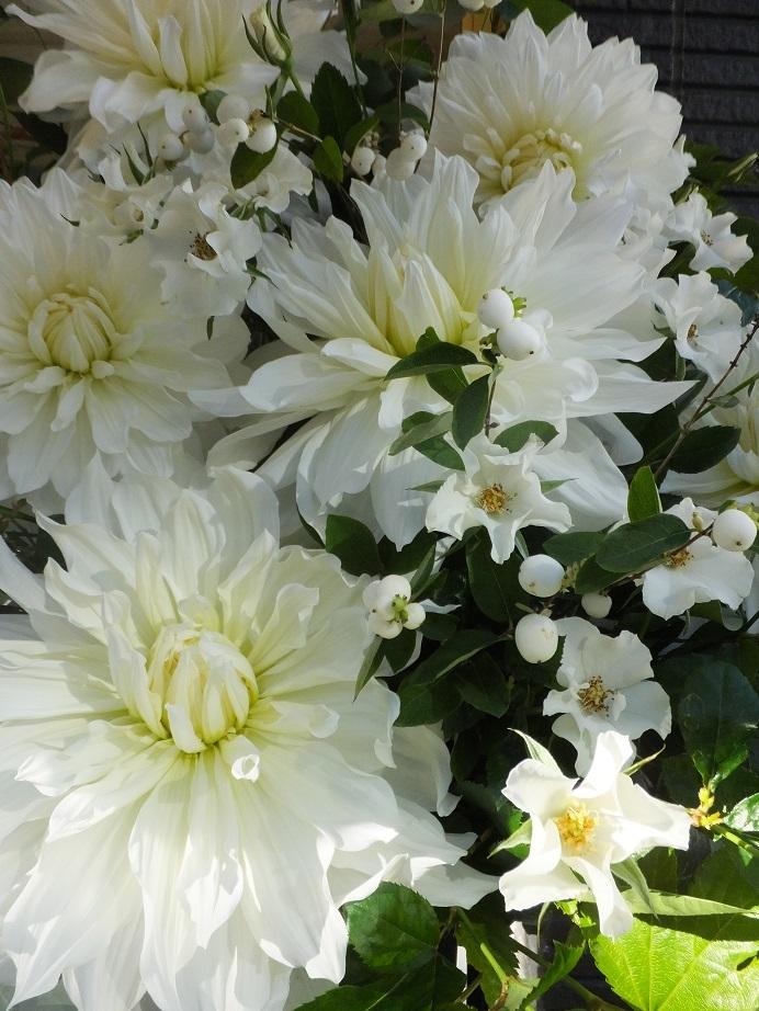 オークリーフ(白いダリアのスタンド装花)_f0049672_16531392.jpg
