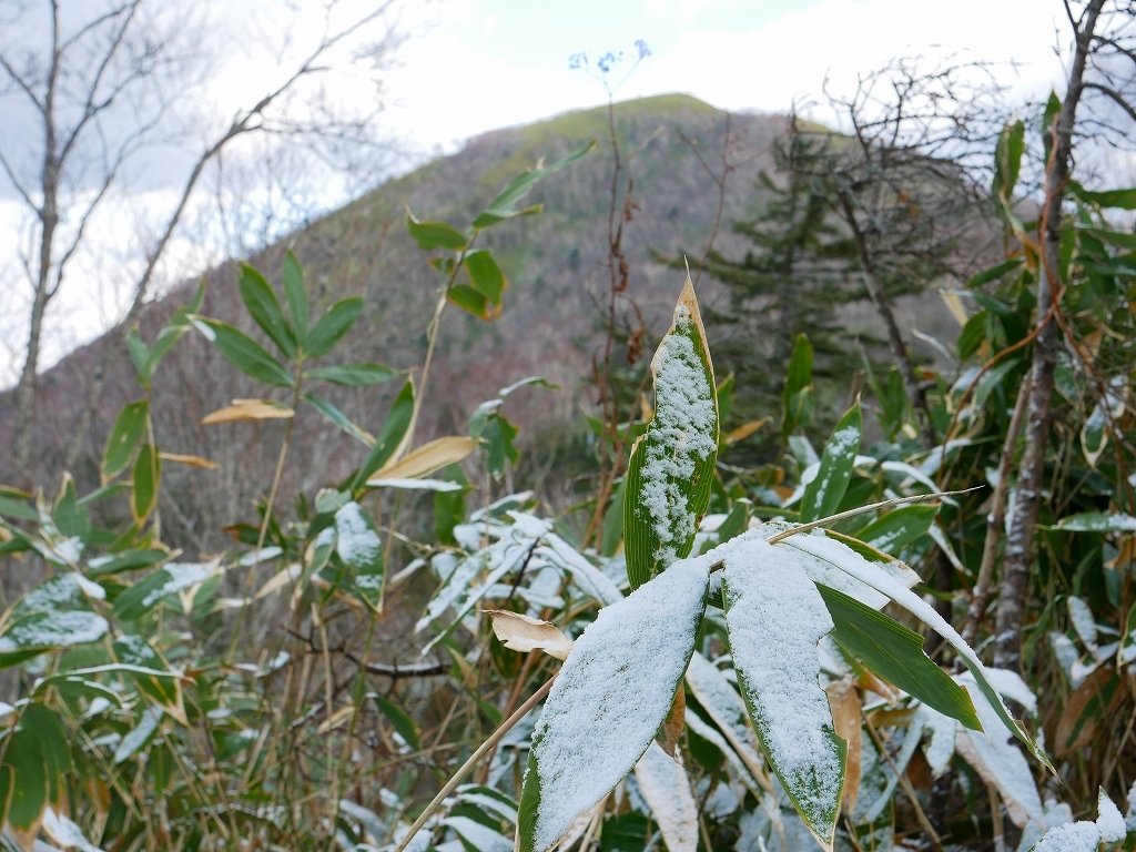 イチャンコッペ山と幌平山、2017.11.16_f0138096_18210941.jpg