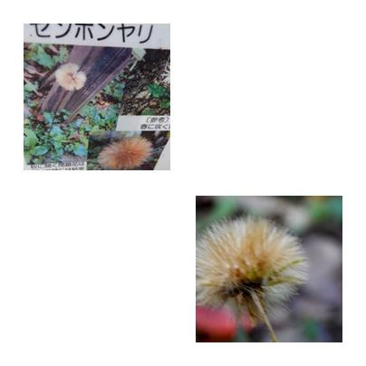 b0352112_1348584.jpg