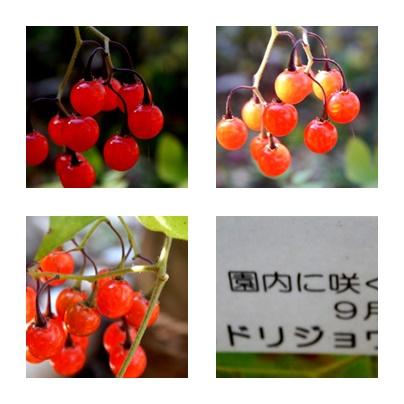 b0352112_13515324.jpg