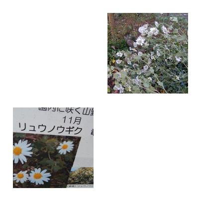 b0352112_13523738.jpg