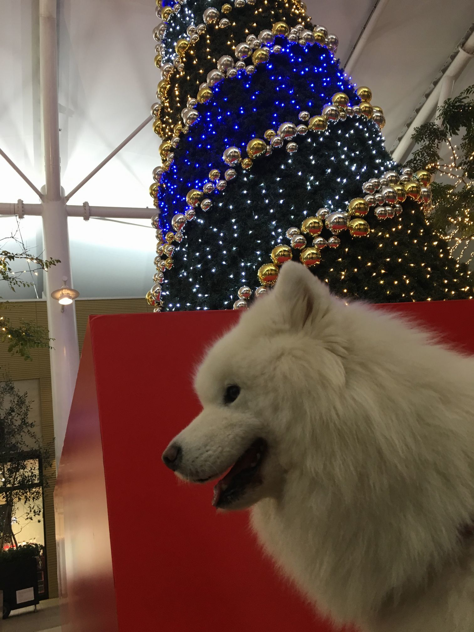 2017年秋 横浜~東京旅行 その2_f0128542_00425268.jpg