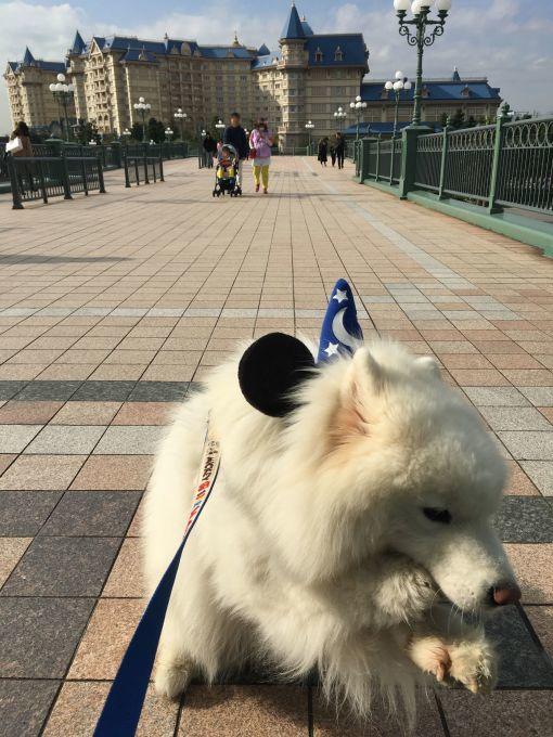 2017年秋 横浜~東京旅行 その2_f0128542_00565330.jpg
