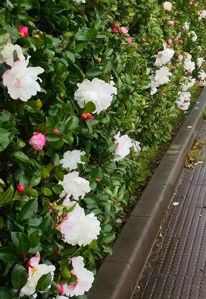 f0333346_20113162.jpg