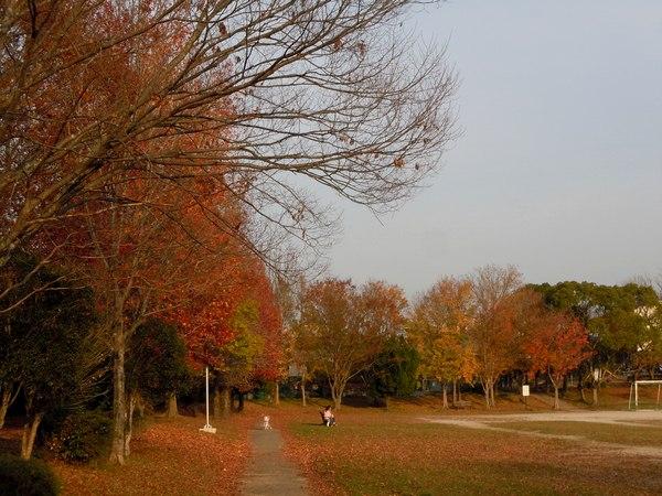 路傍の花、樹々の鳥(188) ~ 眼福はご近所の紅葉で ~_b0102572_2229997.jpg