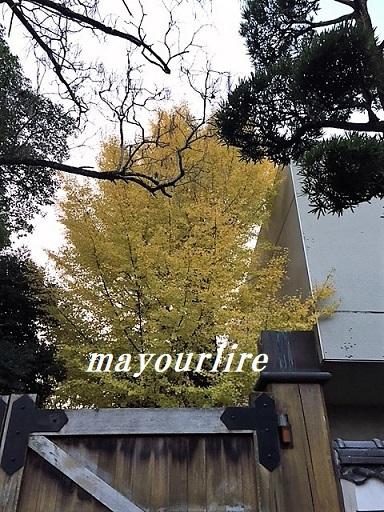 岡山後楽園 秋の幻想庭園_d0169179_00341342.jpg