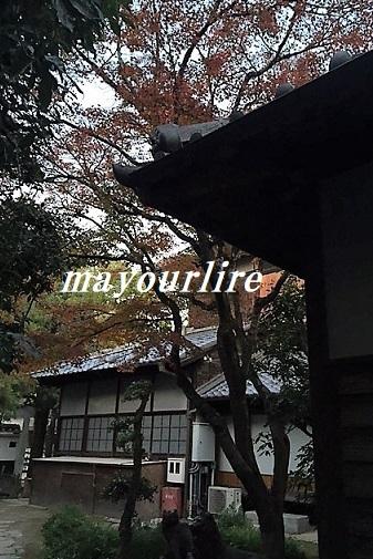 岡山後楽園 秋の幻想庭園_d0169179_00342780.jpg