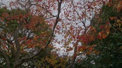 富浜緑地情報♪ただいま紅葉やどんぐりが見られます!_d0338682_09042238.jpg