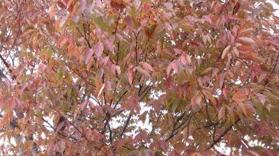 富浜緑地情報♪ただいま紅葉やどんぐりが見られます!_d0338682_09050662.jpg
