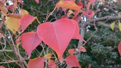 富浜緑地情報♪ただいま紅葉やどんぐりが見られます!_d0338682_09052151.jpg