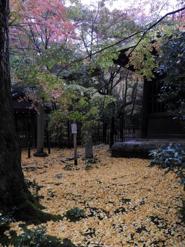 雨の蓮華寺_e0048413_13381743.jpg