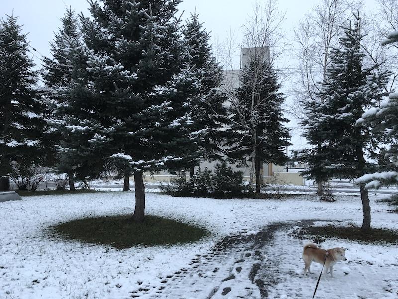 やっと冬らしく_e0227023_11391315.jpg
