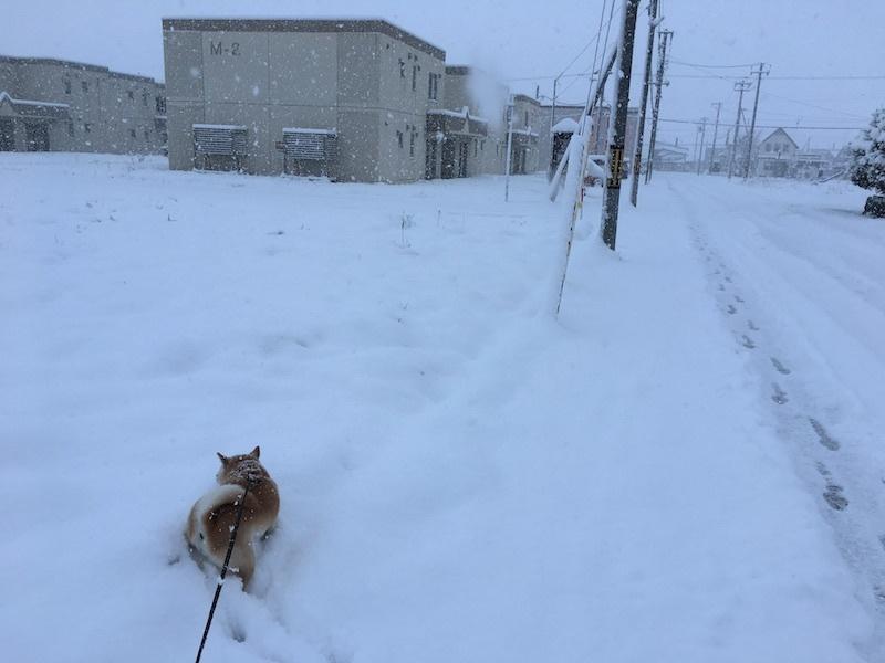 やっと冬らしく_e0227023_11391458.jpg