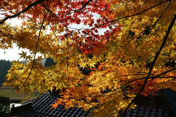 紅葉、そして寒い季節_d0231263_2153382.jpg