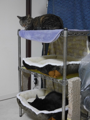 冬の猫マンション_a0001971_00113533.jpg