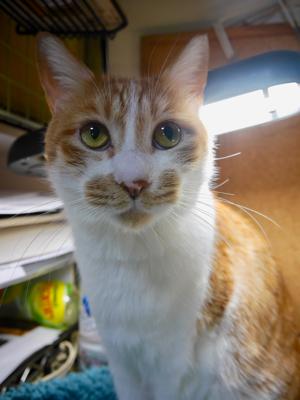 冬の猫マンション_a0001971_00113627.jpg
