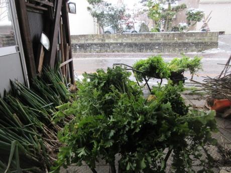 葱と大根を穫る・そのあと初雪_a0203003_21462486.jpg