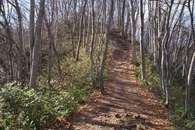 2017年11月17日(金)  藻岩山(標高531m)旭山公園コース_a0345007_13284778.jpg