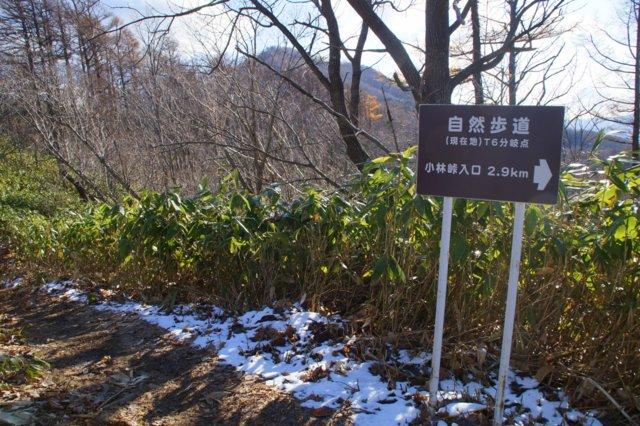 2017年11月17日(金)  藻岩山(標高531m)旭山公園コース_a0345007_1330154.jpg