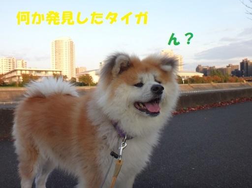 f0121712_22032022.jpg