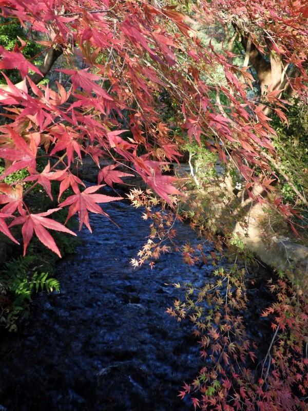 上賀茂神社 紅葉盛り_e0048413_21202414.jpg