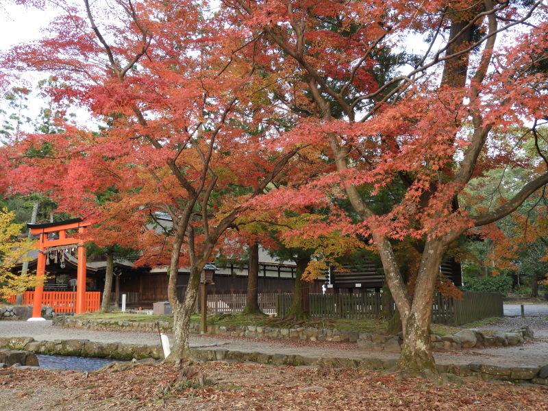 上賀茂神社 紅葉盛り_e0048413_21205080.jpg
