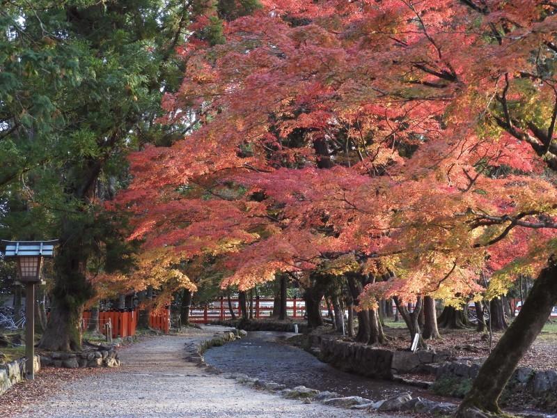 上賀茂神社 紅葉盛り_e0048413_21211299.jpg