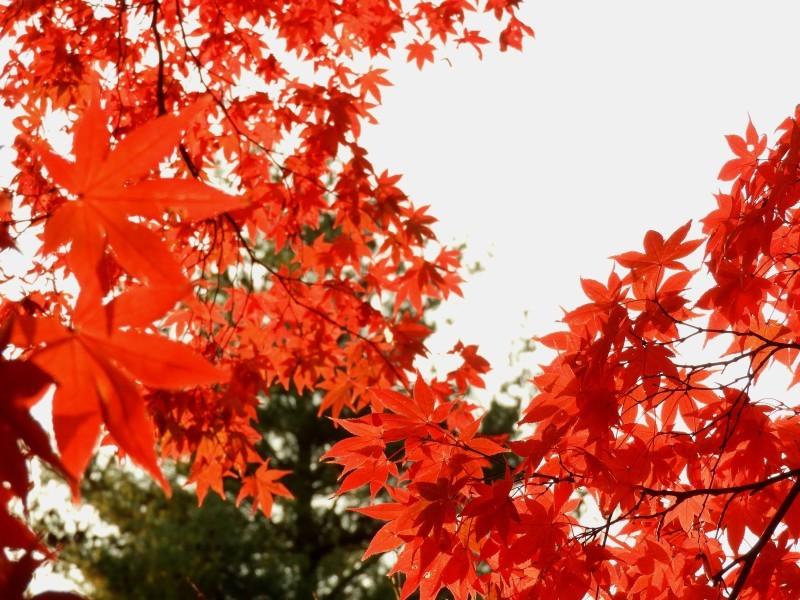 上賀茂神社 紅葉盛り_e0048413_21215222.jpg