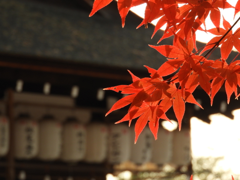 上賀茂神社 紅葉盛り_e0048413_21222057.jpg